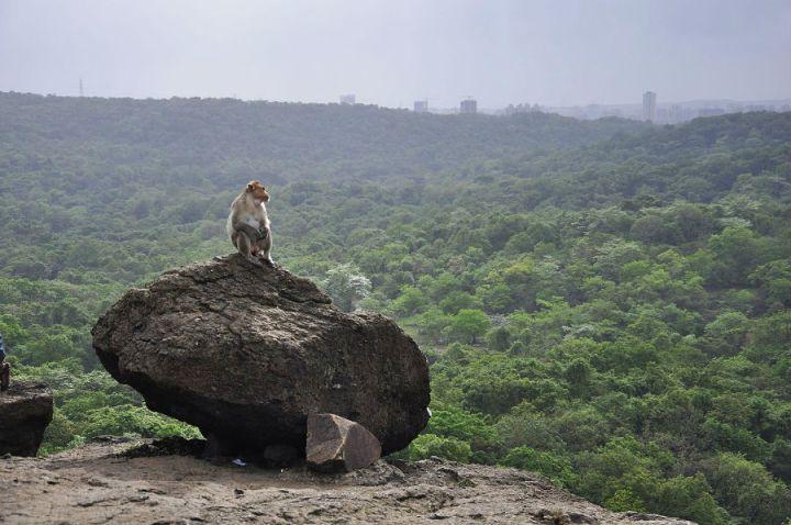 Sanjay_Gandhi_National_Park
